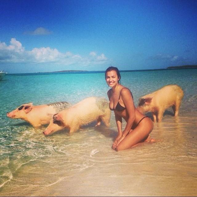 irina-shayk-pigs