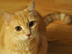 cat-620x465